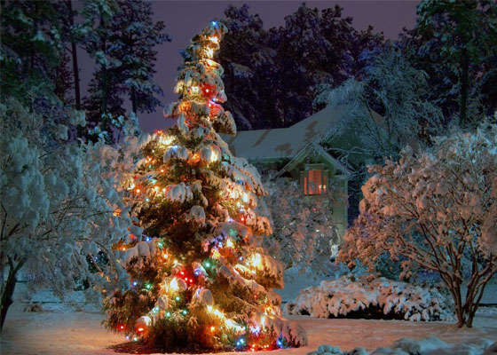 Christmas tree in the snow wallpaper