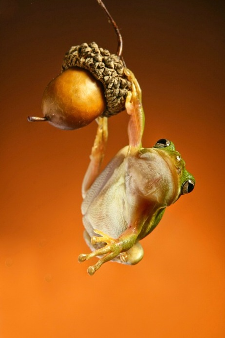 Frog Examples of Super Excellent Photography