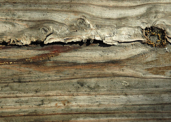 big-wood-texture 30+ Awesome Free Wood Textures