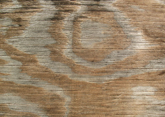 bittbox wood texture