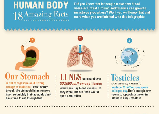 Human-Body 30+ Healthcare Infographics Designs