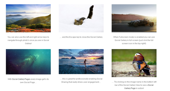 social-gallery-examples