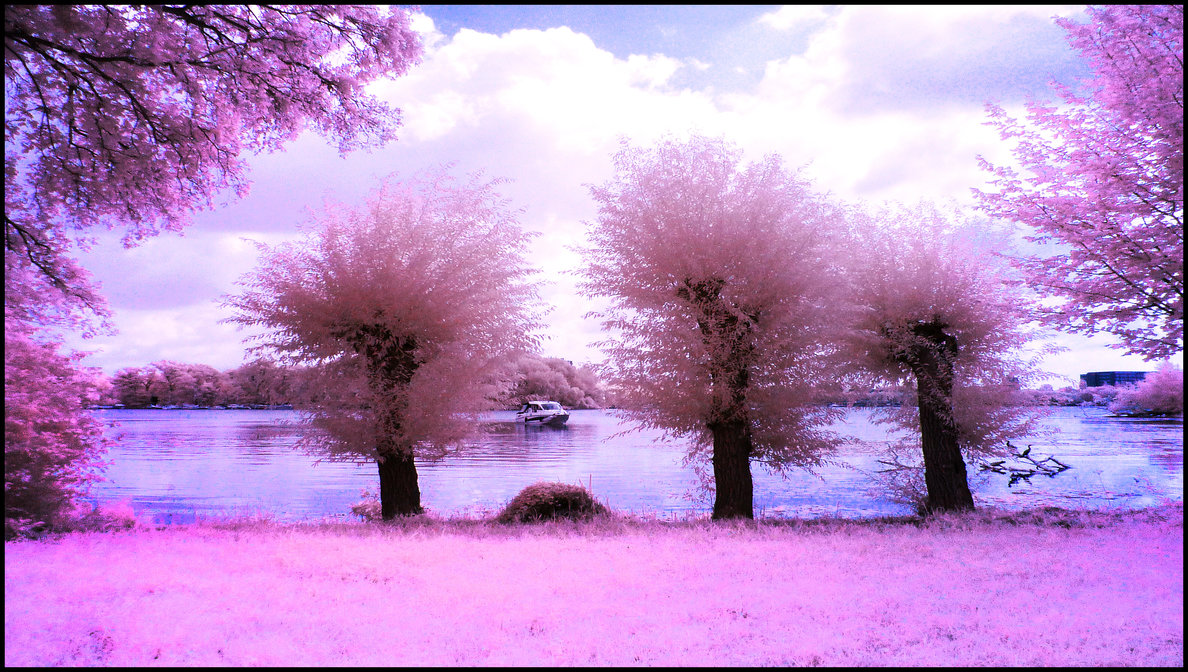 Three Willow Trees infrared